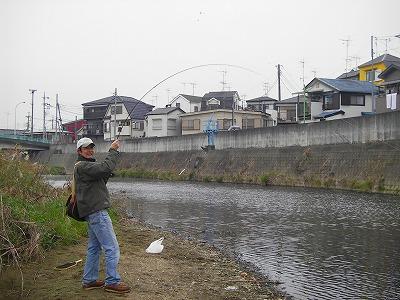 N-siki-koi1.jpg