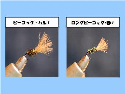 haru0228.jpg