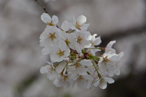 yukou0323d.jpg